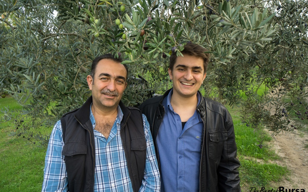 The Gemlik Olive Farmer