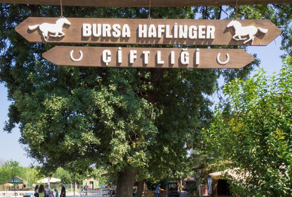 Weekend Mornings at Bursa Haflinger Çiftliği